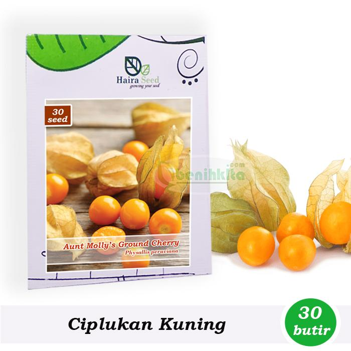 Benih-Bibit Ciplukan Kuning Ground Cherry (Haira Seed)