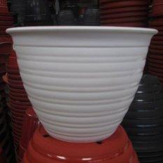 Pot Tanaman tawon-putih