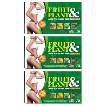 Fruit Ant Plant Pelangsing Herbal - 3 Pcs | Lazada Indonesia