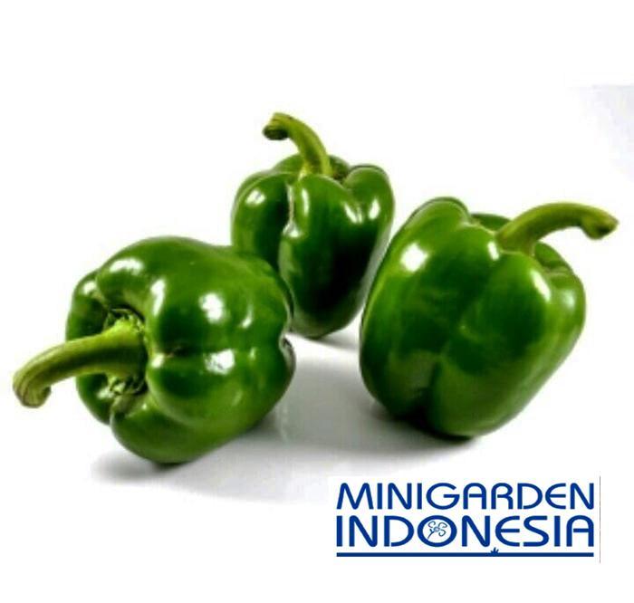 4 benih cabai Paprika hijau Beatuty Bell F1 bibit tanaman sayur sayuran cabe