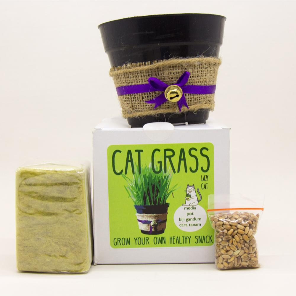 StarStore Cat Grass Seeds Starter Kit / Bibit Rumput makanan Kucing