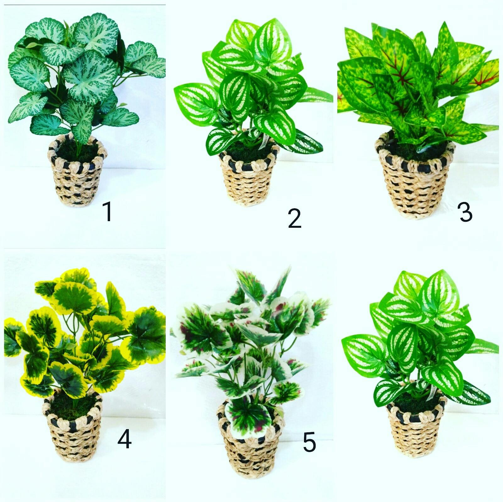 Artificial tanaman keladi pot rotan anyam