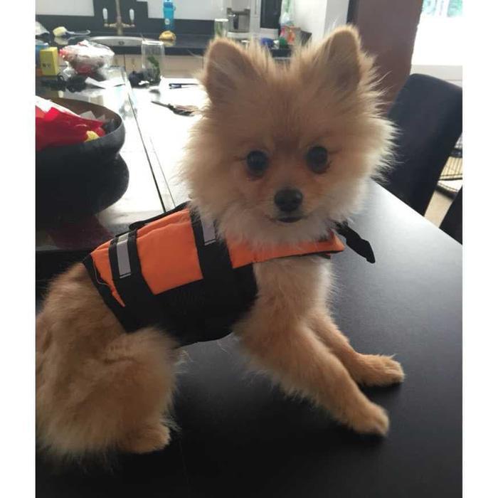 Jaket Pelampung Baju Renang Anjing