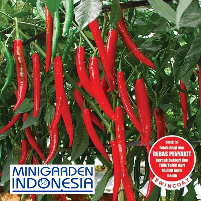 20 Benih Cabai Besar Hibrida Astina F1 bibit tanaman sayur sayuran cabe hijau / merah