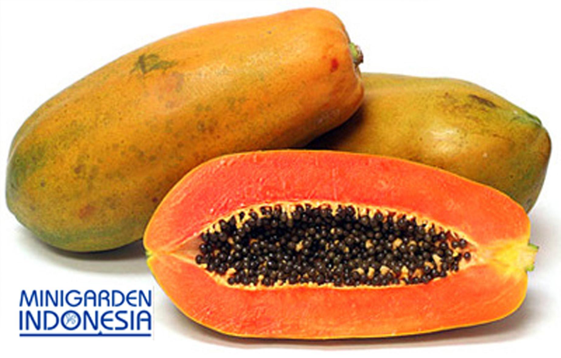 4 Benih Pepaya Bangkok bibit tanaman buah