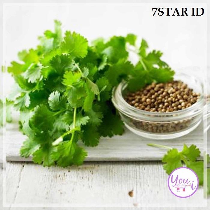 Bibit Tanaman 7STAR - Benih Sayur Bibit Coriander / Ketumbar 10 Pcs