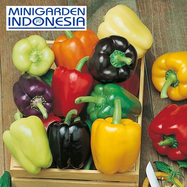 2 Benih paprika rainbow (Sweet) Colour Spectrum F1 Mr. Fothergills Bibit tanaman Sayuran cabai cabe