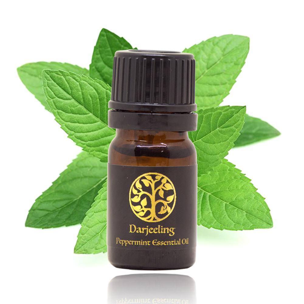 Parfum Ruangan Rumah Terbaik Twin Pack Glade Matic Spray Refill Lavender 146gr Peppermint Essential Oil Minyak Daun Mint 100 Alami 5ml