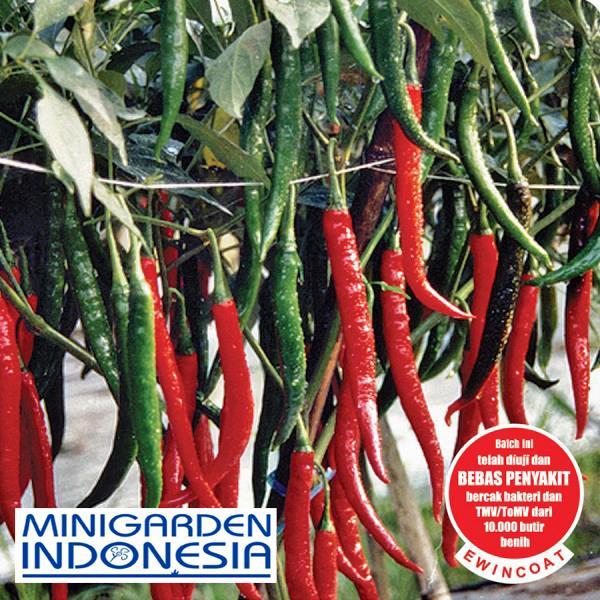 15 benih cabai besar keriting gada F1 ( 10-14 gram / buah ) bibit tanaman sayur sayuran cabe lombok