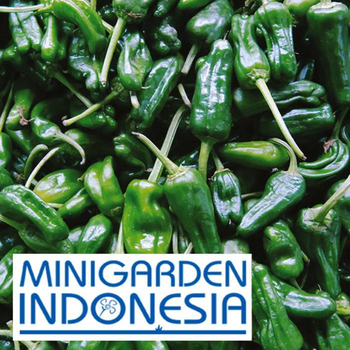 benih cabai rawit PEPPER (Hot) Padron F1 FOTHERGILLS bibit sayur sayuran cabe hijau import