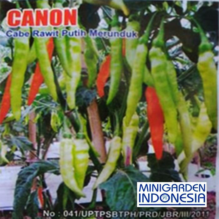 50 Benih Cabe Rawit Putih Canon Bibit Tanaman Sayuran Cabai