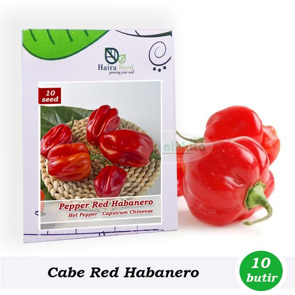 Benih-Bibit Cabe Super Pedas Red Habanero (Haira Seed)
