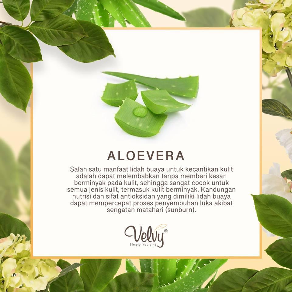 Kelebihan Velvy Body Scrub Green Tea Aloe Vera Original 100 Gram Goats Milk Royal Jelly And Sunflower 250g Spa