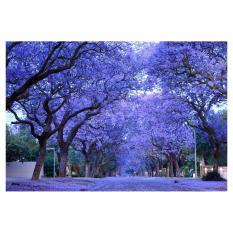 Amefurashi Bibit Benih Pohon Jacaranda Showy Tree Flower