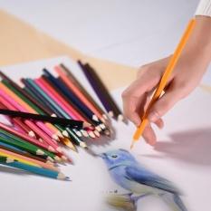 ... Pensil Gambar Artis Sketsa Seni Source · Seni Cat 48warna Sketsa Source Jual Marco Basis Minyak Sehat Bebas Racun