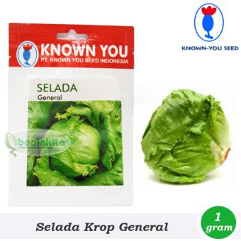 Benih - Bibit Sayuran Selada General - Head Lettuce (Known YouSeed)
