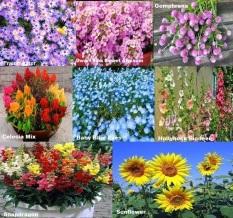 Bibit Benih Paket Hemat Bibit Bunga 8 jenis Bunga Cantik