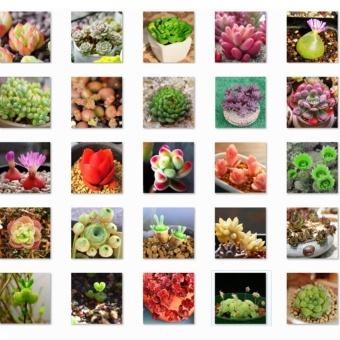 ... Eachgo 300 Seeds Pack Mix Succulent Lotus Lithops Succulent plants Seeds for Home Garden Flower