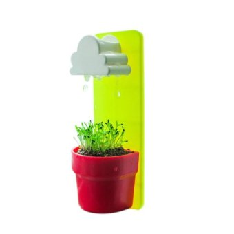 Harga Mini Cloud Rainy Plant Flower Pot Nutritional Soil + Seed