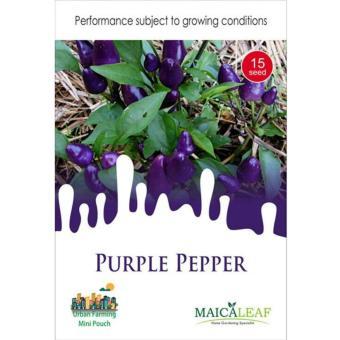 Maica Leaf Cabe Ungu / Purple Pepper Benih Tanaman [15 Benih]