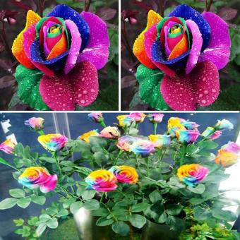 Harga 600pcs Colorful Rainbow Flower Seeds Garden Plants Unique Perennial Lover
