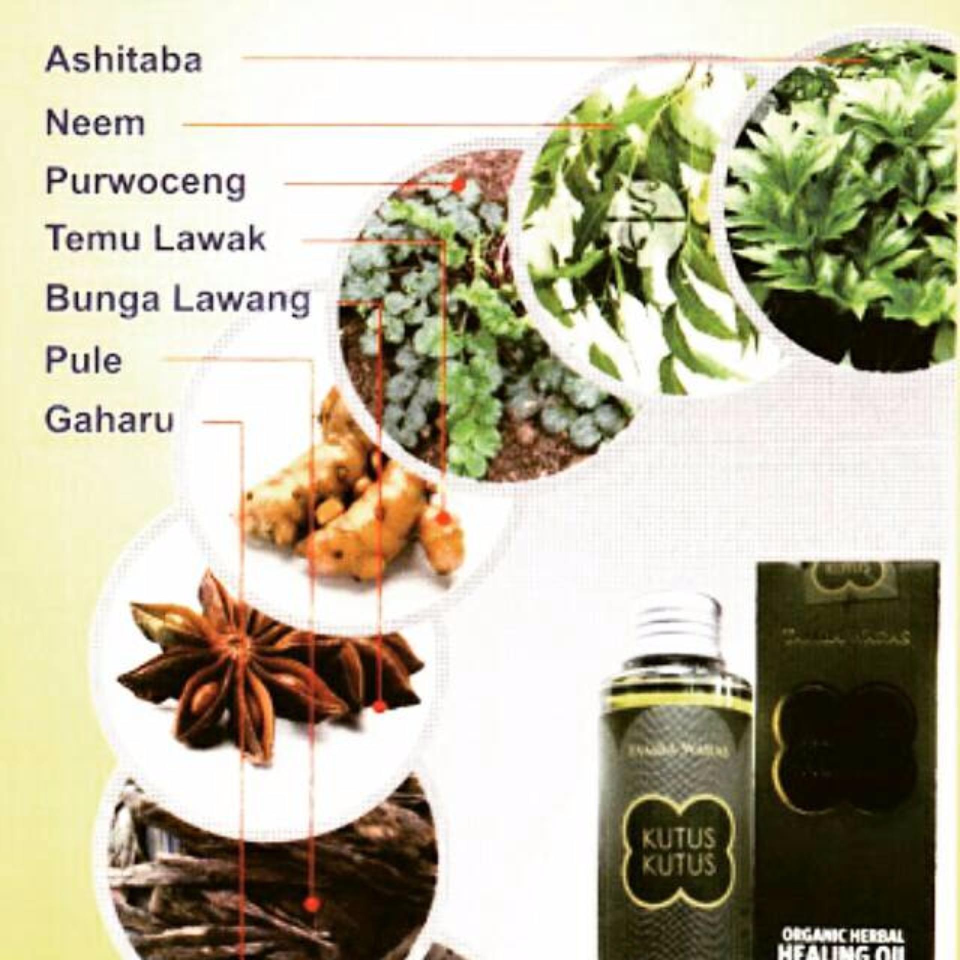Minyak Kutus Tamba Waras Original Bali Daftar Harga Terbaru Healing Oil 100ml Asli Promo