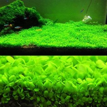 Aquarium Ikan tangki air tanaman rumput benih dekorasi lanskap ornamen (daun kecil) - 2 ...