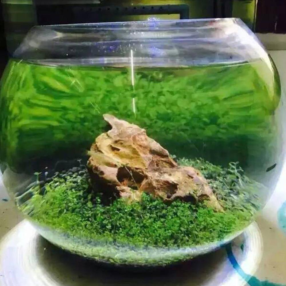 Eachgo Lots Aquarium Plant Seeds Aquatic Double Leaf Carpet Water Grass Fish Tank .