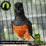 ... Gurah Natural Herbs Bnr Obat Burung Sakit Pernafasan - 3 ...