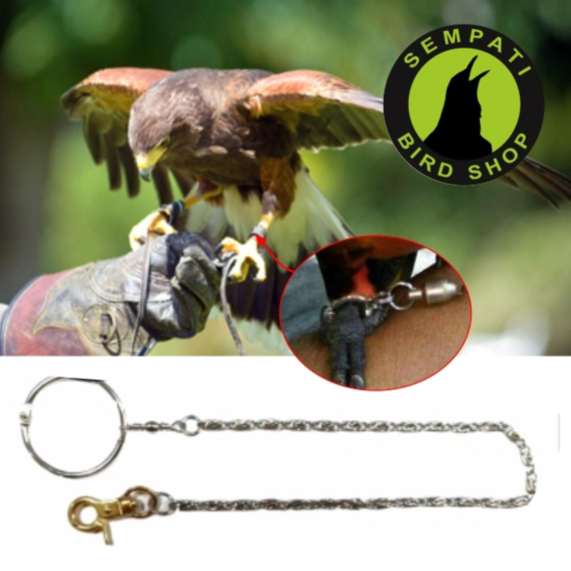 Rantai Besi Kaki Burung African Grey, Parrot, Nuri Dll