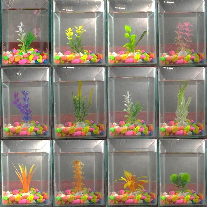 1 Set Akuarium Kaca Aquarium Cupang Dan Ikan Hias Kecil Lazada Indonesia